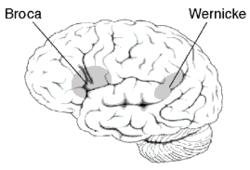 Image: wikipedia