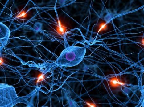 Image: www.sciencedaily.com